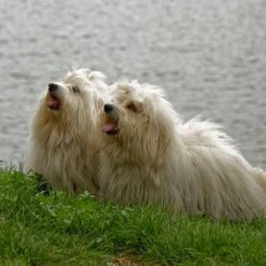 Dvě modelky na břehu přehrady