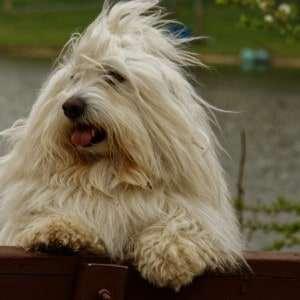 A Buddy z profilu, aby bylo vidět jak mu vlají vlasy.