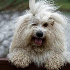Rozčepýřený pes