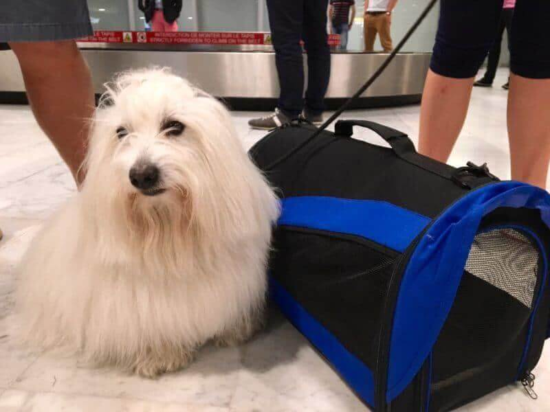 Po přistání v Toulouse, Buddy a jeho taška