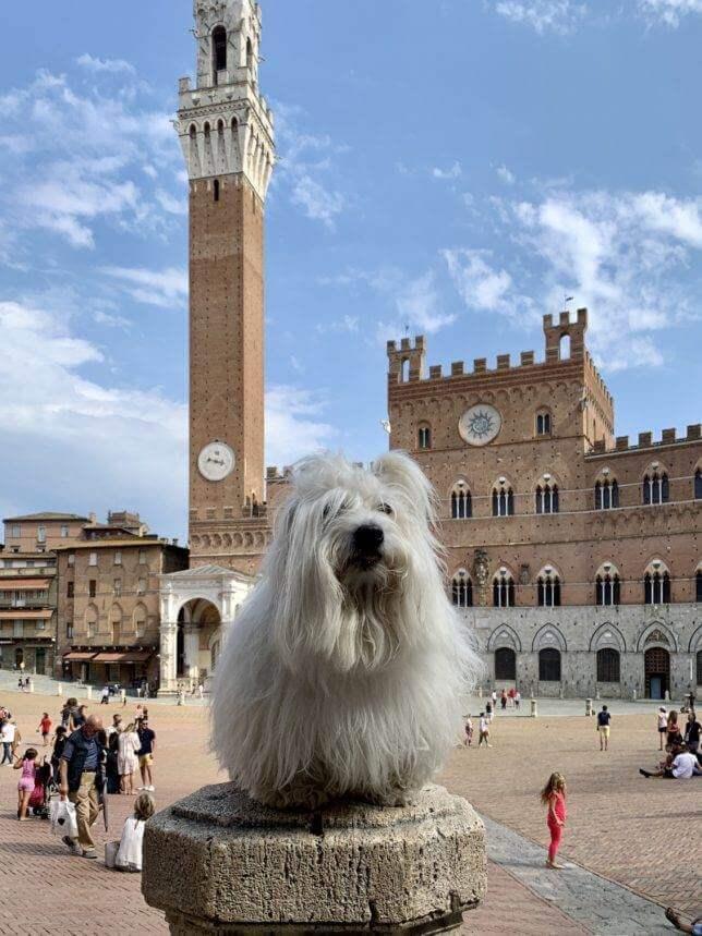 Jsem kulturní pes, jezdím i na výlety